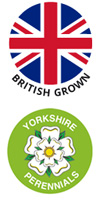 British grown, Yorkshire Perennials